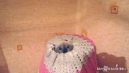 the_lamp_cat.jpg