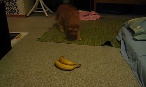 Vaappu_goes_bananas.jpg