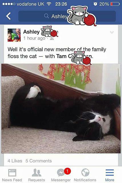 missing_cat.jpg