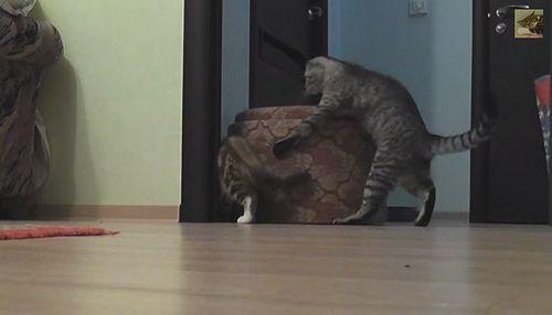 strong_cat.jpg
