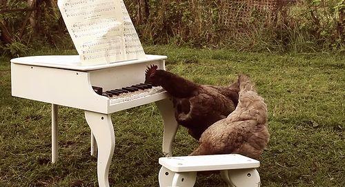 My_Chickens_Symphony.jpg