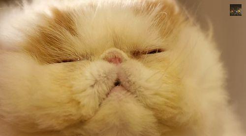 hover_cat.jpg