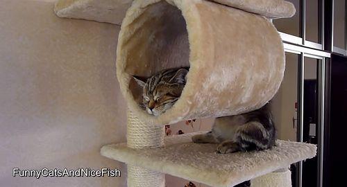 Funny_Cats_Sleeping.jpg