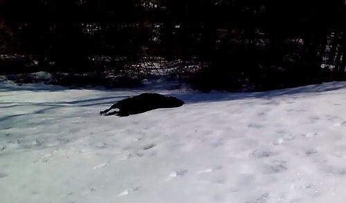 dog_sliding_in_the_snow.jpg