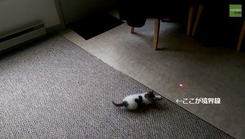 Laser-chasing_kitten.jpg