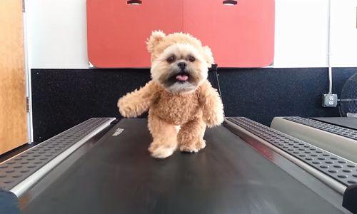 Munchkin_the_Teddy_Bear.jpg