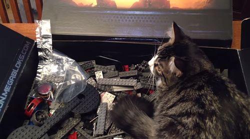 Kitten_Protects_Starcraft_Battlecruiser.jpg