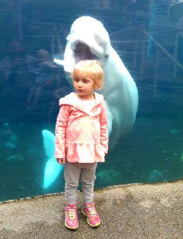 Beluga_Whale_kisses.jpg