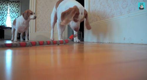 Dog_Rescues_Sister.jpg