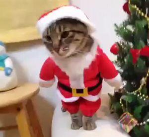 santa_cat.jpg