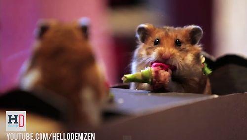 Tiny_Hamsters_Tiny_Date.jpg