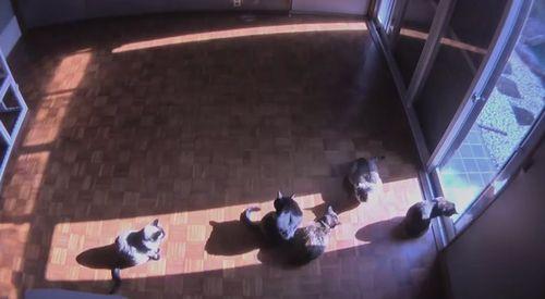 sun_cat.jpg