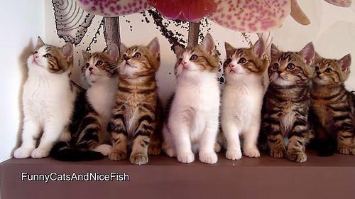 Epic_Dance_Battle_of_Kittens.jpg