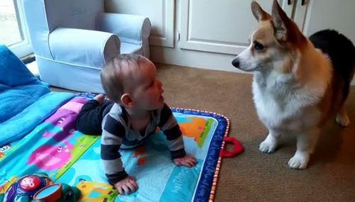 baby_and_corgi.jpg
