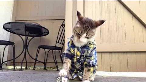 my_cat_pecan.jpg