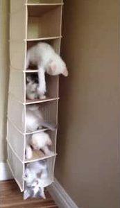 Kitten_Kondos.jpg