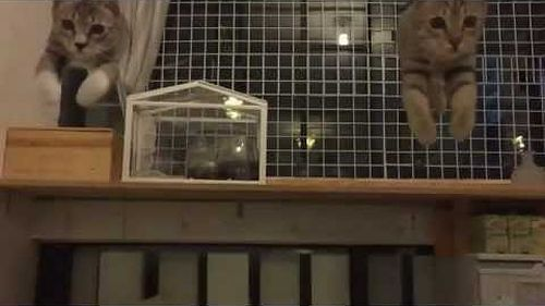 cats_jump.jpg