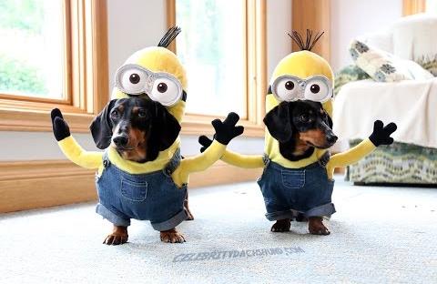 Wiener_Dog_Minions.png