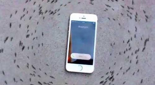 Ants_Circling_Phone.png