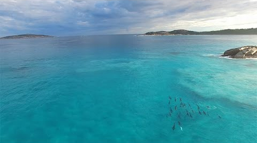Dolphin_Haze_Esperance_Australia.png