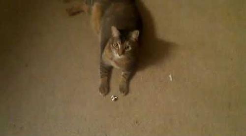 cat_enjoy_fetch.png