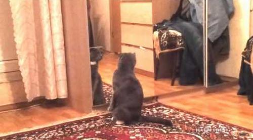 its_cat.png