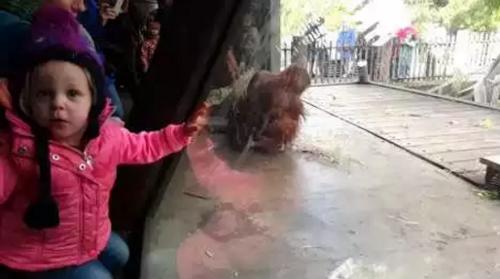 baby_orangutan.png