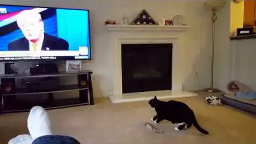 cat_hates_trump.png