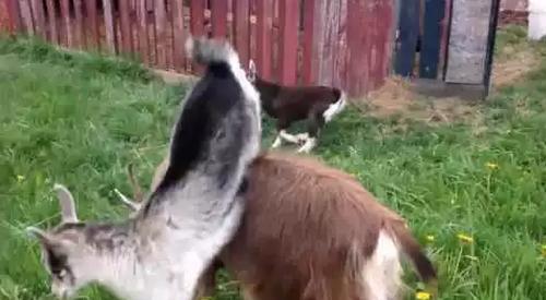 goat_Parkour.png