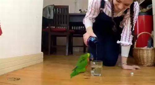 rain_dance_parrot.png