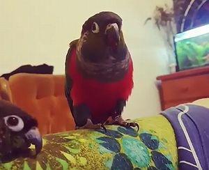 parrot_plays_peekaboo.jpg