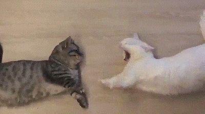 cat_yawns.jpg
