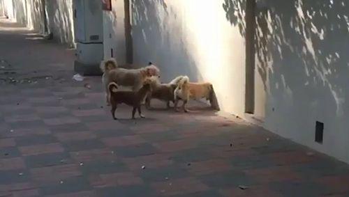 secret_dogs.jpg
