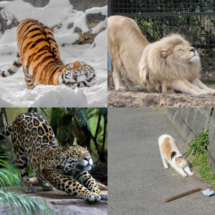 Cats_will_be_cats.png