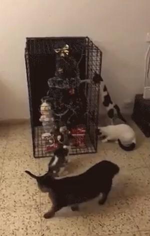 A_saved_Christmas_tree.png