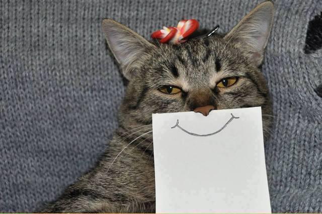 paper_cat01.jpg