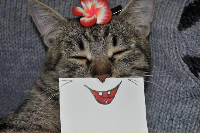 paper_cat02.jpg