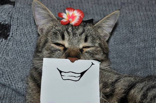 paper_cat03.jpg
