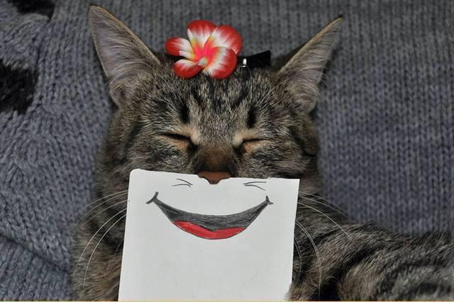 paper_cat04.jpg
