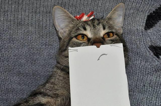 paper_cat06.jpg