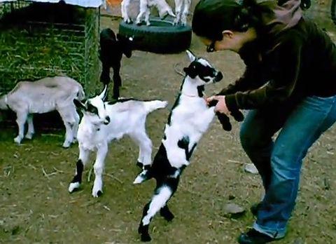 baby_goat_pile.jpg