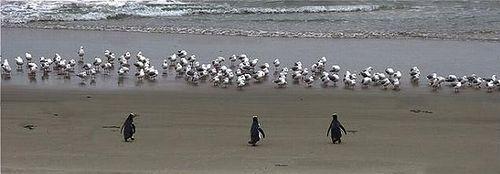 badass_penguins_01.jpg