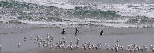 badass_penguins_03.jpg