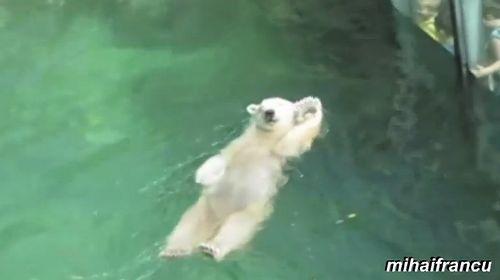bears_acting_like_human.jpg