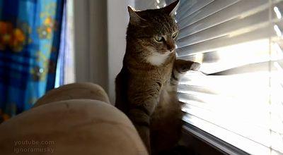 bored_cat.jpg