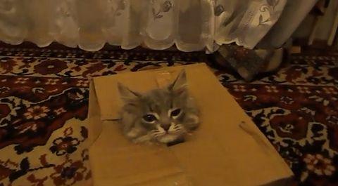 box_cat.jpg