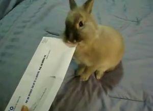 bunny_letter_opener.jpg