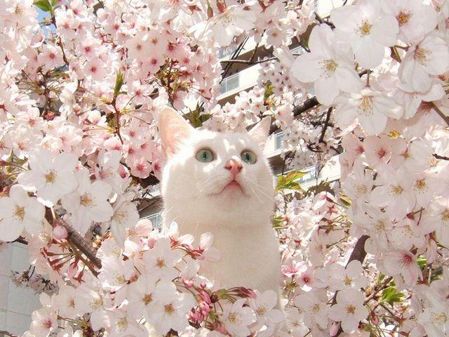 cat_Blossom.jpg