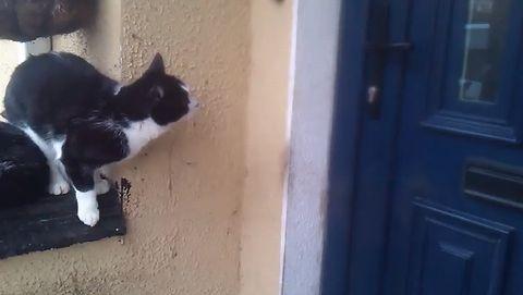 cat_opens_door.jpg