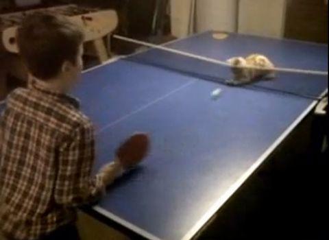 cat_ping_pong.jpg